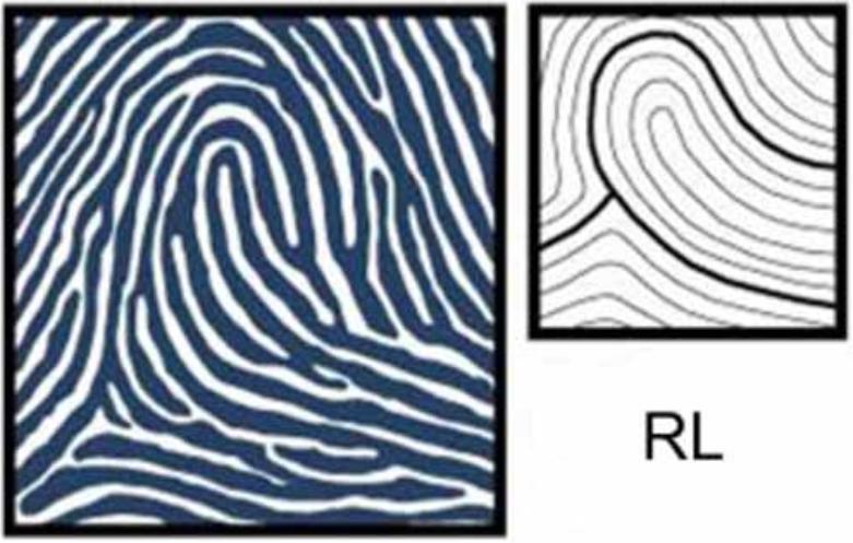 Chủng dấu vân tay RL