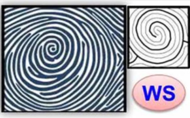 chủng dấu vân tay WS