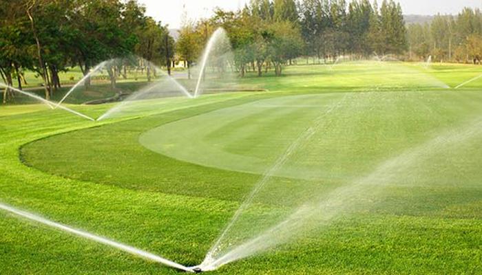 Chăm sóc cỏ trong các tháng tiếp theo