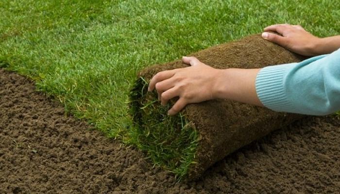Quy trình trồng cỏ sân golf đúng chuẩn